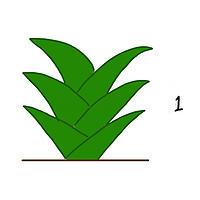 観葉植物の成長1
