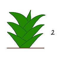 観葉植物の成長2