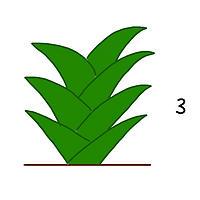 植物の成長の図3