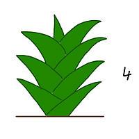 観葉植物の成長3