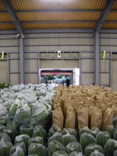 観葉植物の出荷