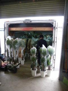 観葉植物の荷積み